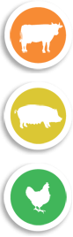 vache-porc-volaille